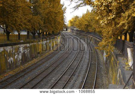Autumn Train Tracks