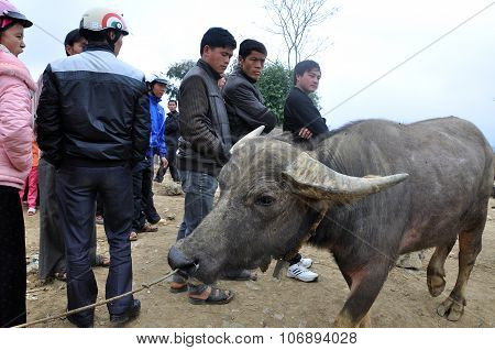 Animal Market In Bac Ha, Vietnam