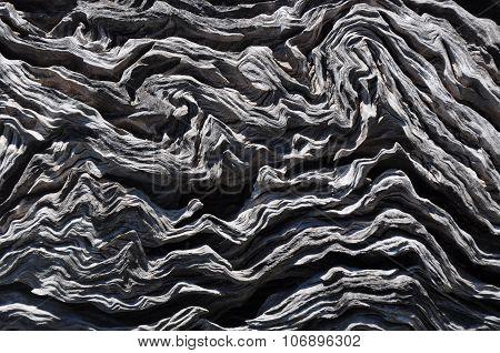 Tree Bark Texture: Western Australia