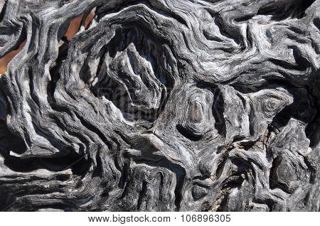 Wavy Tree Bark Texture Closeup