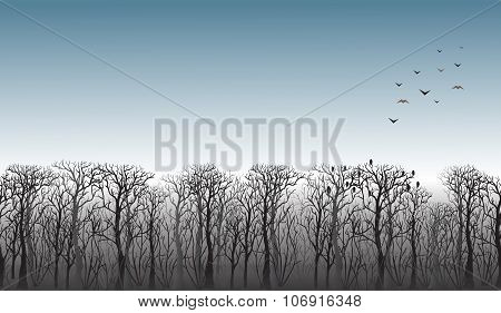 Line Of Trees On The Horizon
