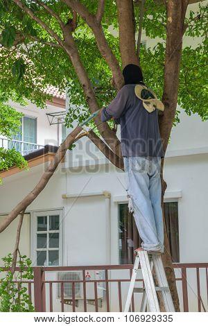 Chop The Tree