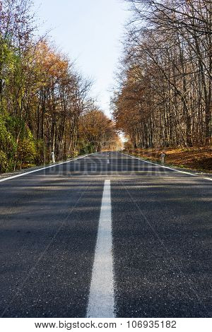 Road Through Autumnal Forest