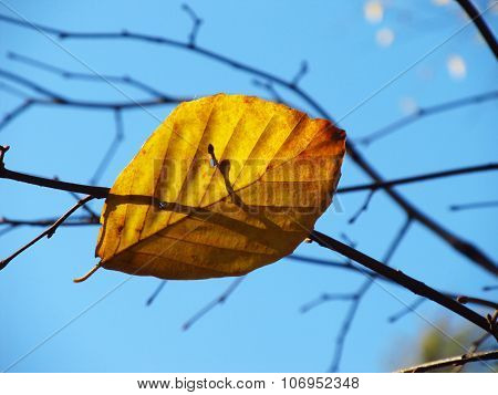 yellow leaf on the twig