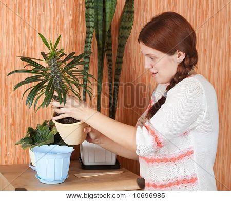 Woman Replants Pachypodium Cactus