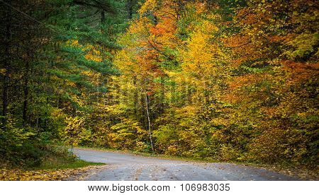 Autumn color illuminates the forest  in late October