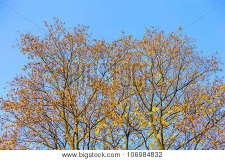 Branchy Trees With Autumn Leaves