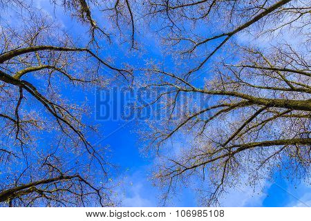 Leafless Tree Branches Against The Sky