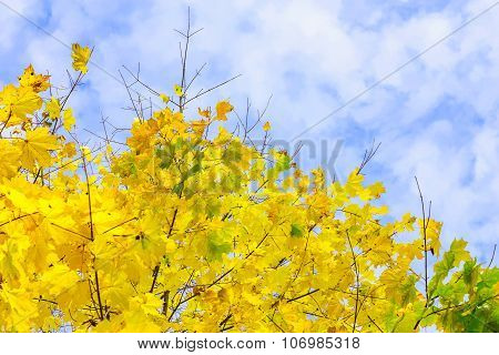 Crown With Yellow Maple Leaves