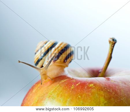 Snail On A Red Apple