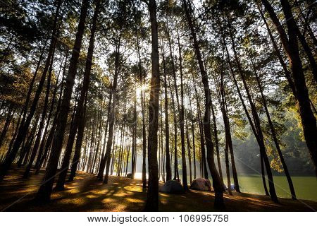 Sunlight With Green Forest