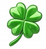 picture of four leaf clover  - Clover with four leafs  - JPG