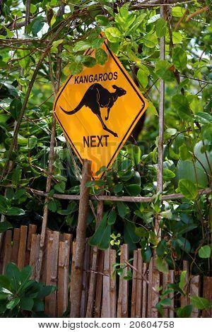 Kangaroos Next