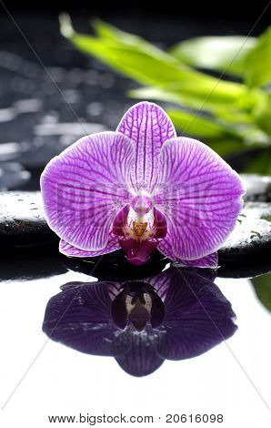 Macro of pink orchid and with green leaf on zen stones