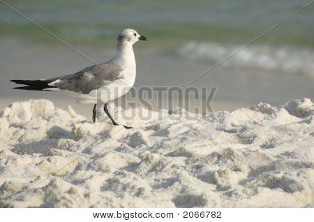 Seagull Walk