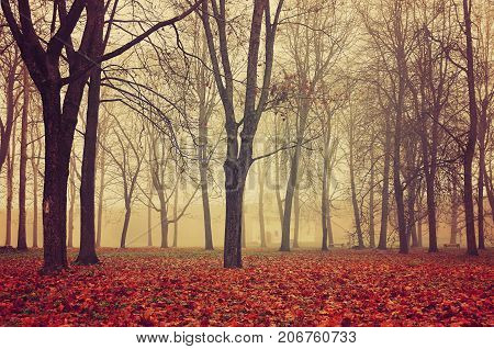 poster of Autumn park in dense autumn fog. Autumn foggy landscape with bare autumn trees and fallen red autumn leaves. Mysterious autumn landscape scene in foggy autumn weather