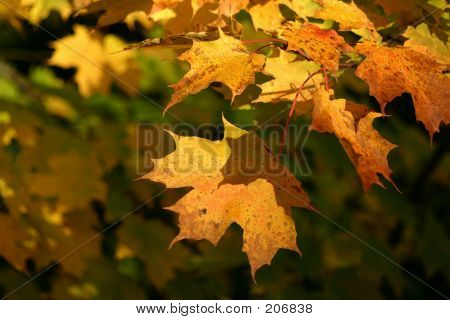 Warm Leaves