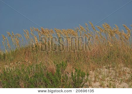 Beach Grass On The Outer Banks
