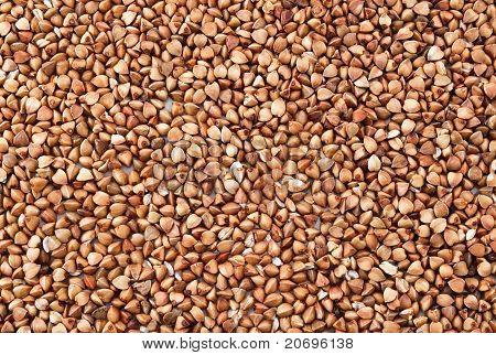 Buckwheat Background