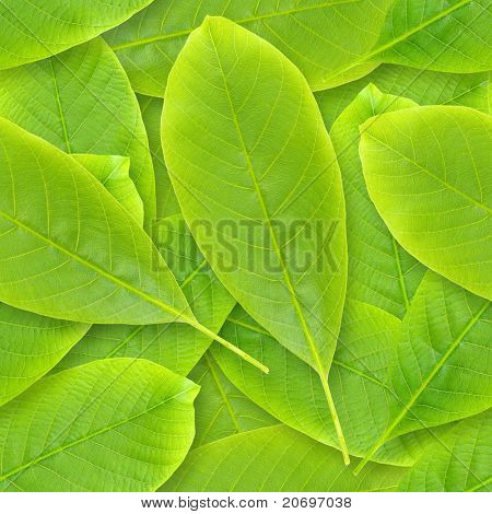 Nutwood leafs seamless background - background for continuous replicate. See more seamless backgrounds in my portfolio.