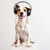 Dog in headphones listening to music. Happy pet poster