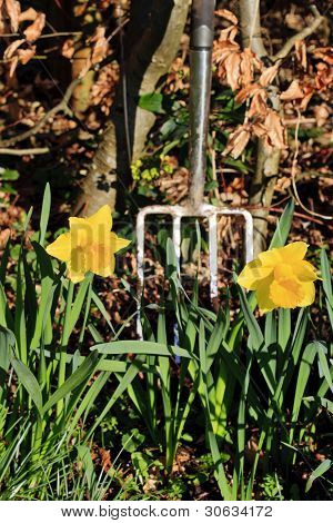 Spring clean in the garden - portrait