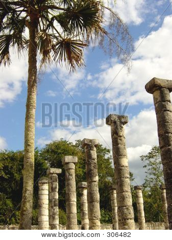 Palm And Columns