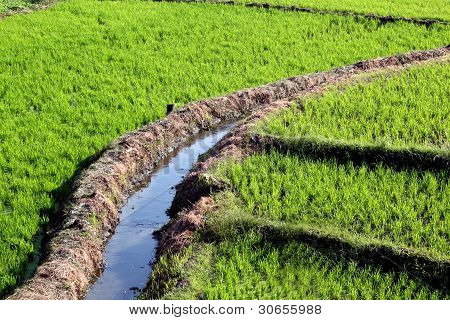 Rice Field Irrigation
