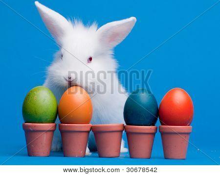 Frohe Ostern - Häschen und Ostern Eier