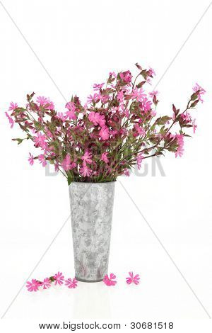 Red campion wildflower arrangement in an old aluminium vase with loose flowers, isolated over white background. Silene dioica. Also known as rose campion.