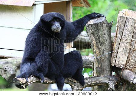 Monkey sitting vacant