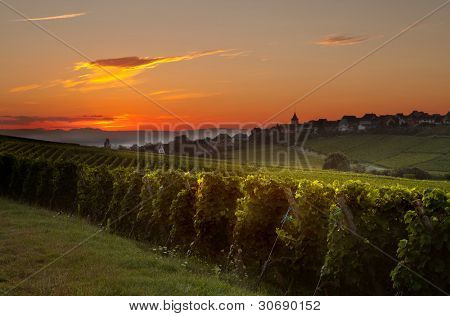 Summer morning sunrise in the French vineyard region of Alsace