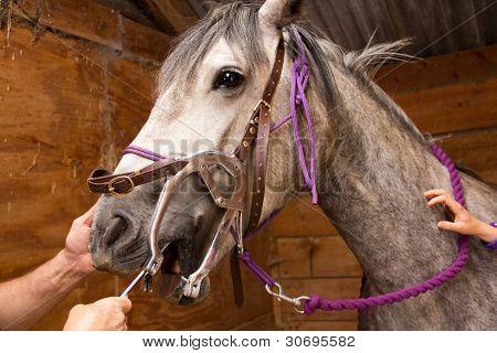 Equine dentist