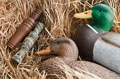 image of gadwall  - duck decoy with stuffed and some calls - JPG