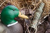 picture of pintail  - duck decoy with stuffed and some calls - JPG