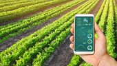 A Hand Is Holding A Smartphone With Infographics On The Background Of A Carrot Plantation. Agricultu poster