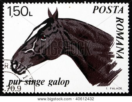 Postage stamp Romania 1970 Trotter Thoroughbred, Horse