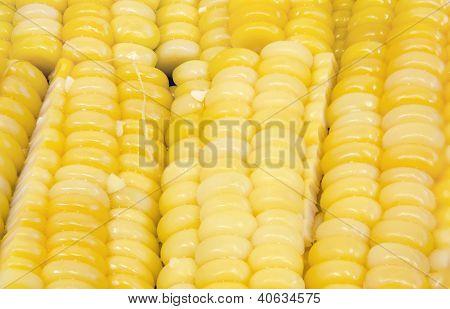 Corn Seed Texture