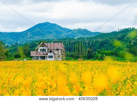 House in the Meadow