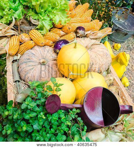 Vegetables Garden Stuff