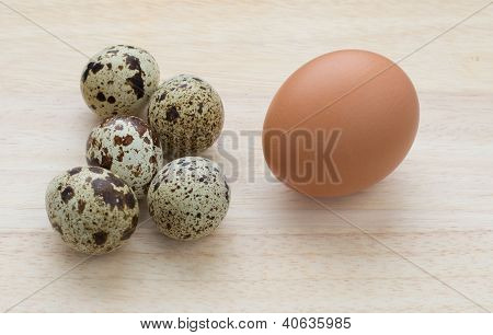 Five Quail And One Chicken Eggs