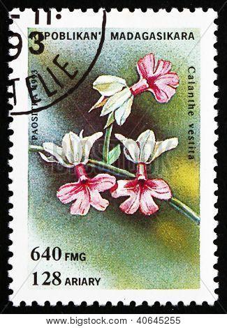 Postage stamp Malagasy 1993 Calanthe Vestita, Orchid