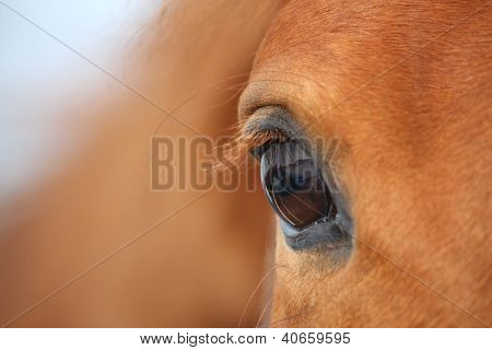 Chestnut Horse Eye