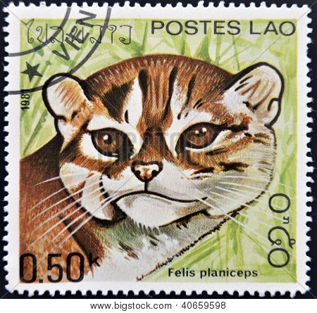 LAOS - CIRCA 1981: A stamp printed in Laos shows a Felis planiceps circa 1981