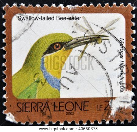 A stamp printed in sierra Leone shows Swallow-talied Bee eater merops hirundineus circa 2002