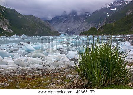 Green Grass Near McBride Glacier, Glacier Bay National Park, Alaska