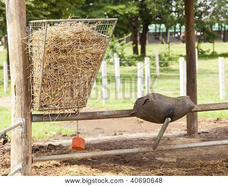 Poor Horse Feeder