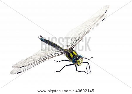 Dragonfly On White