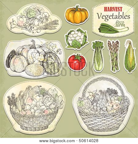Hand-drawn collection basket with crop of vegetables and icons, vector illustration in vintage style.