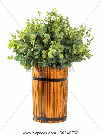 Bunch Of Eucalyptus Leaf
